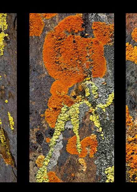 Lichen Tryptich Photography Art | Felice Willat Photography
