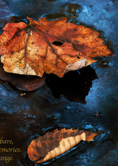Leaf On Frozen Water Photography Art | Ed Sancious - Stillness In Change