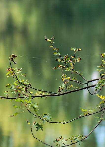 Riverside Photography Art | Ed Sancious - Stillness In Change