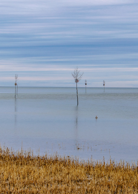 Blue Clam Trees Photography Art | The Colors of Chatham