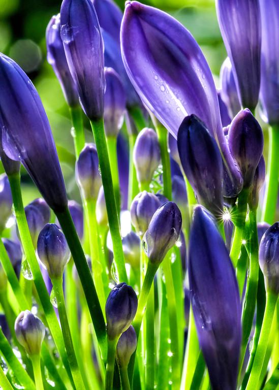 Jewels On Flowers Photography Art | Mindy Fine Art Photography