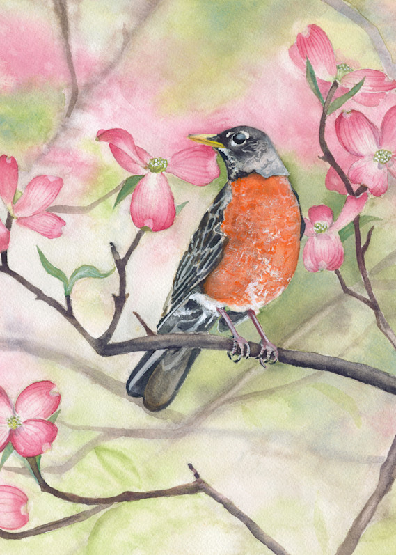 All American Robin  Art | Katherine Rodgers Fine Art