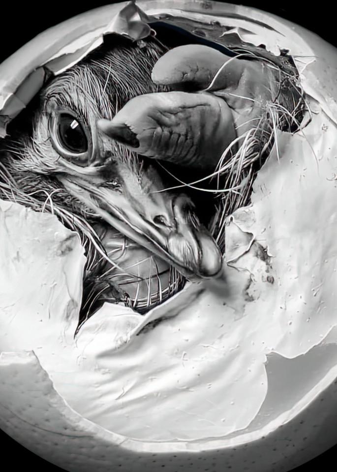 Ostrich Hatchling No. 2, Print, 2020 by artist Carolyn A. Beegan