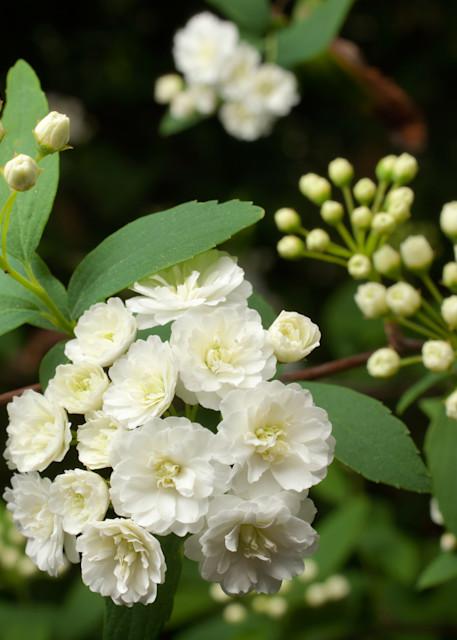 Tiny White Blossoms Photography Art | Rick Gardner Photography