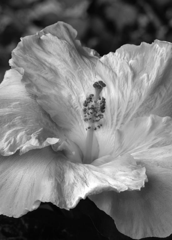 White Hibiscus Photography Art | Rick Gardner Photography