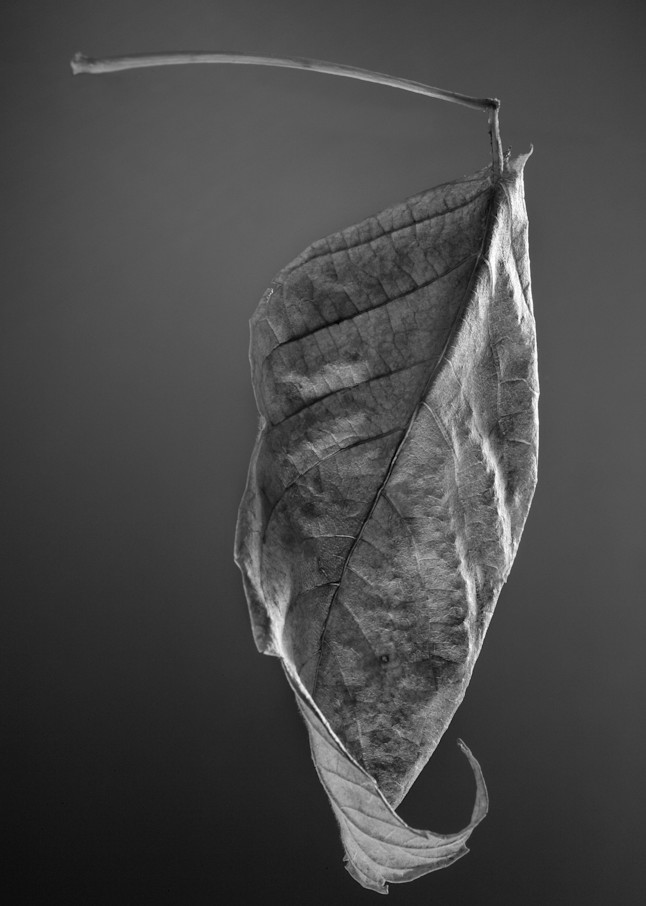 Leaf Making A Left Turn Photography Art | Rick Gardner Photography