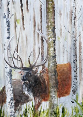 Elk In The Birch  Art | Drivdahl Creations