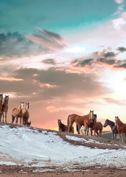 Attentive Colorful Wild Horses Photography Art   Great Wildlife Photos, LLC