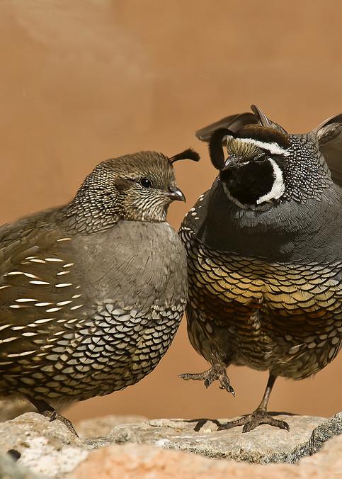 Happy Dance  Photography Art | Great Wildlife Photos, LLC