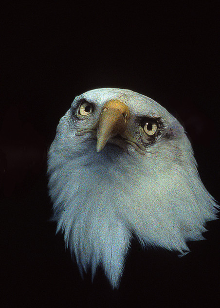 Oh Say Can You See Photography Art | Great Wildlife Photos, LLC