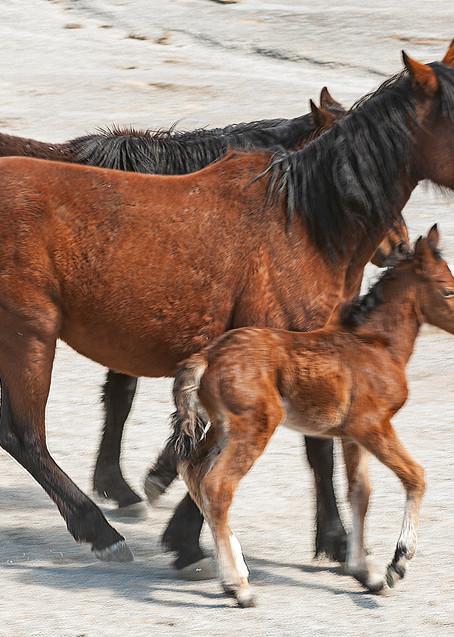 Herd With Newborn Photography Art   Great Wildlife Photos, LLC