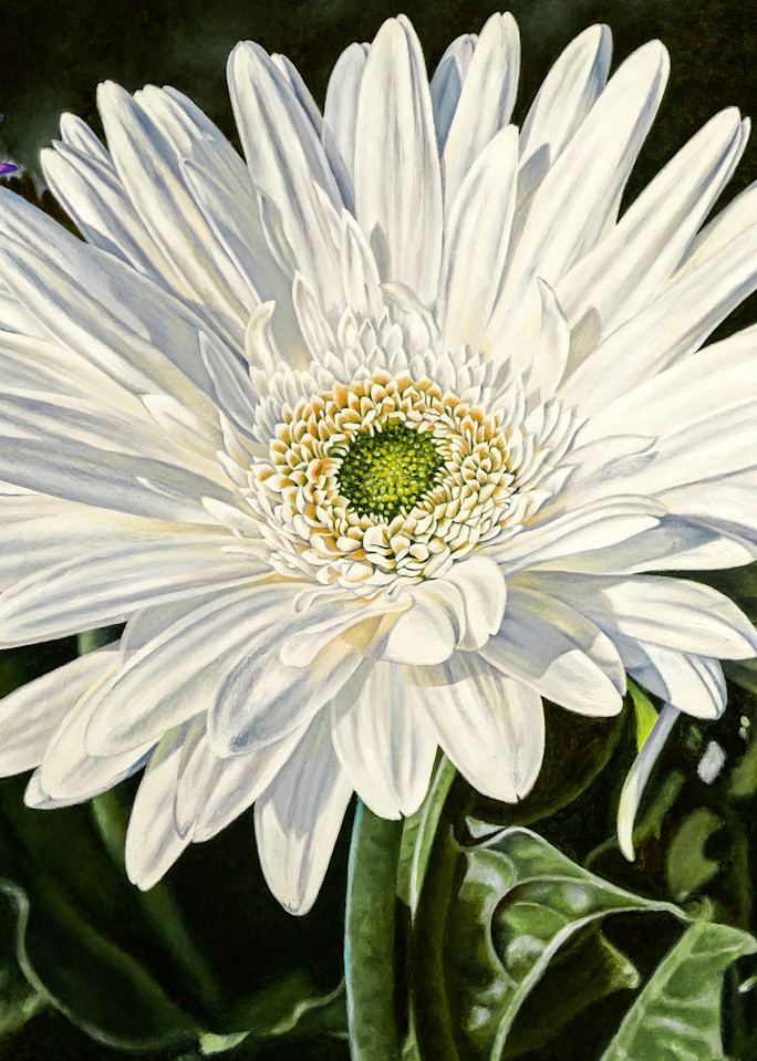 White Gerber ~ Cheer   Products Art | Mercedes Fine Art