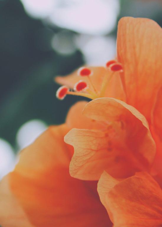 Orange Flora 2015