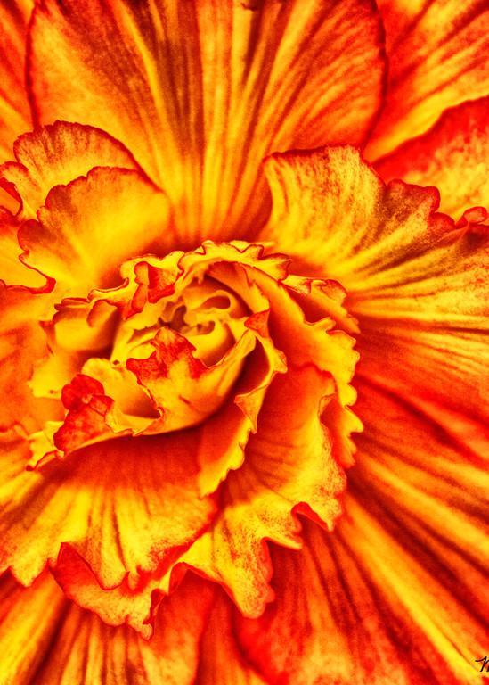 Orange Photography Art | Mindy Fine Art Photography