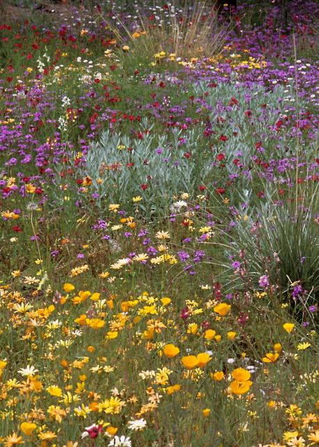 Desert Bloom Photography Art   Great Wildlife Photos, LLC