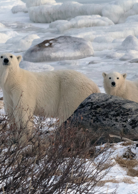 Alert Mom And Cub Photography Art | Great Wildlife Photos, LLC