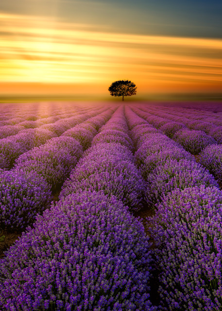 Harv Greenberg Photography - Sunset in Provence