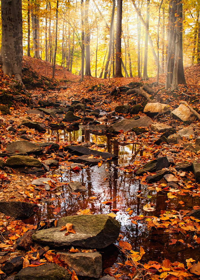 Sunrays over a Forest Stream