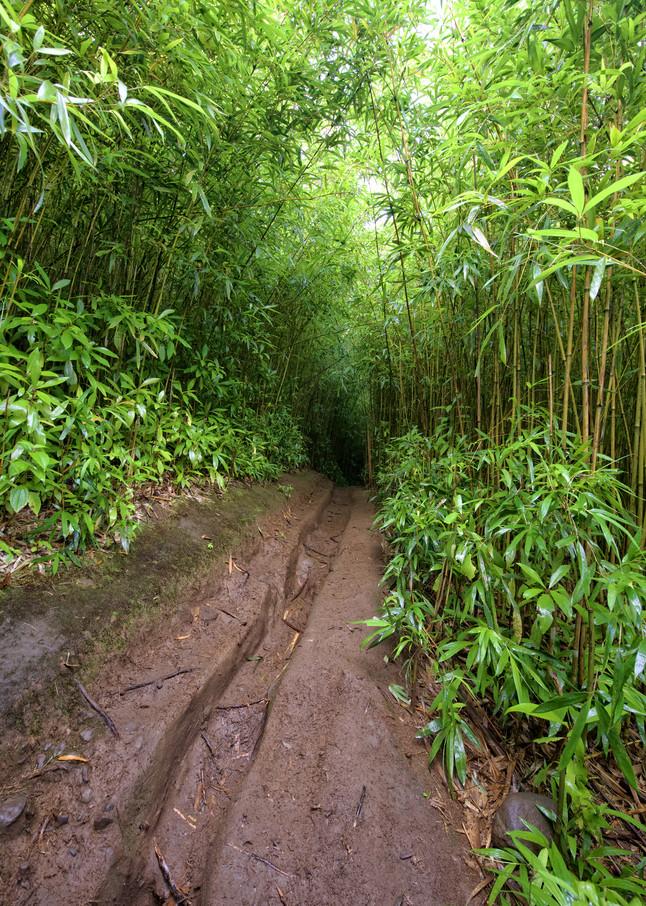 Bamboo Forrest Photography Art | Douglas Hoffman Photography