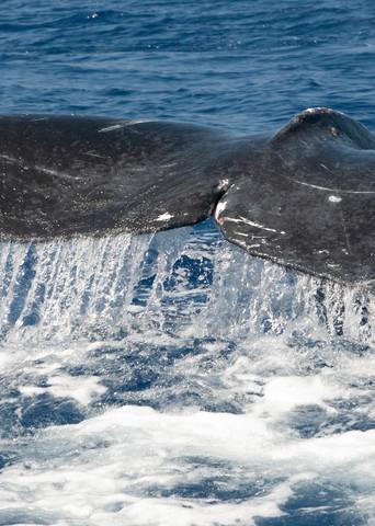 Whale Tale Photography Art | Douglas Hoffman Photography