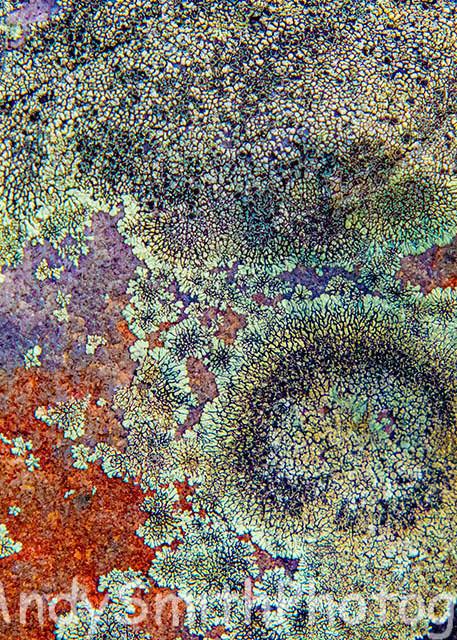 Lichens on Appalachian Trail