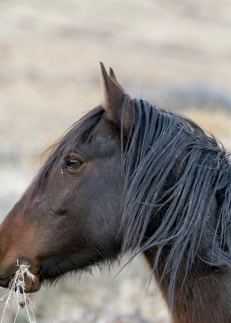 Stallion Profile Photography Art | Great Wildlife Photos, LLC