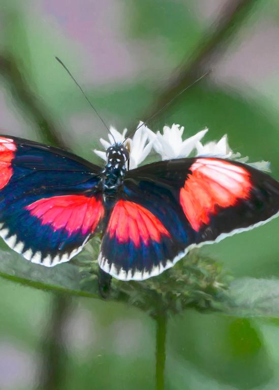 Paintbox Tropical Butterfly Art | Light Pixie Studio