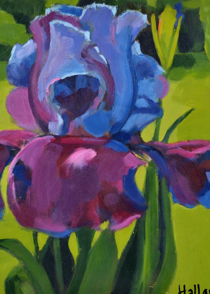 Purple Bearded Iris Mini Print Art | Jenn Hallgren Artist