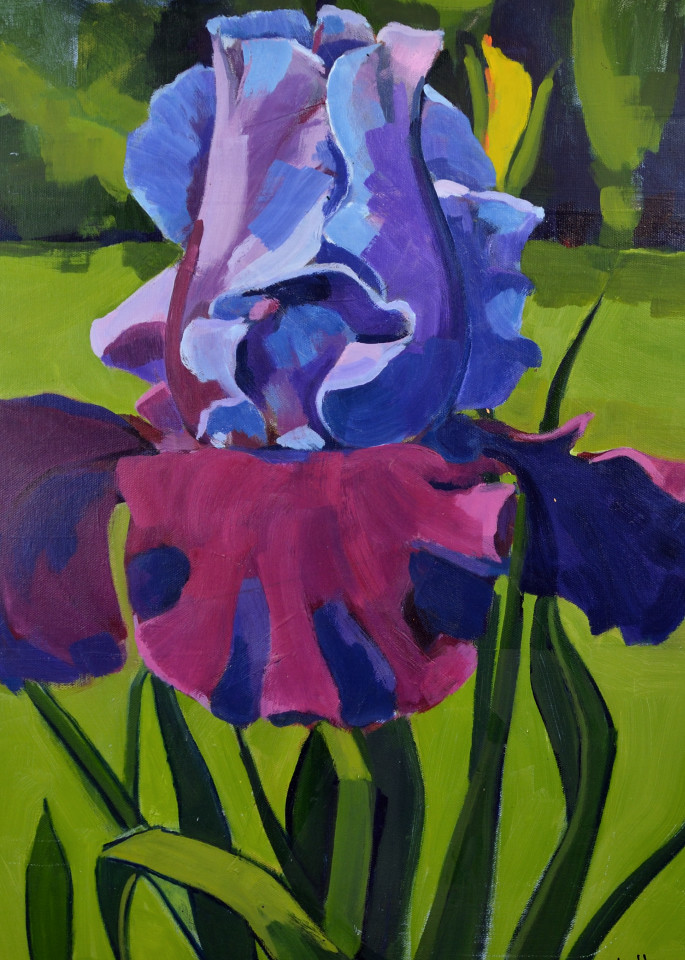 Large Bearded Iris Print Art | Jenn Hallgren Artist