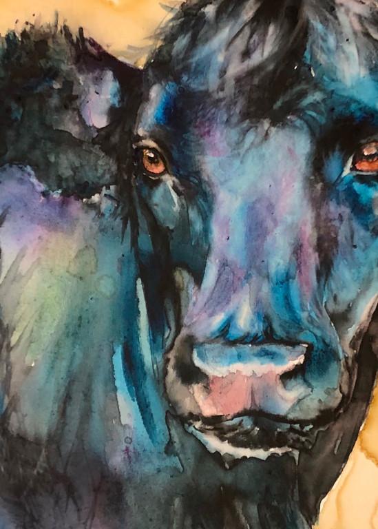 Black Angus Cow Portrait