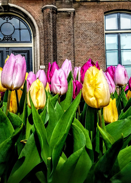 Amsterdam And Tulips, Number One Photography Art | Photoissimo - Fine Art Photography