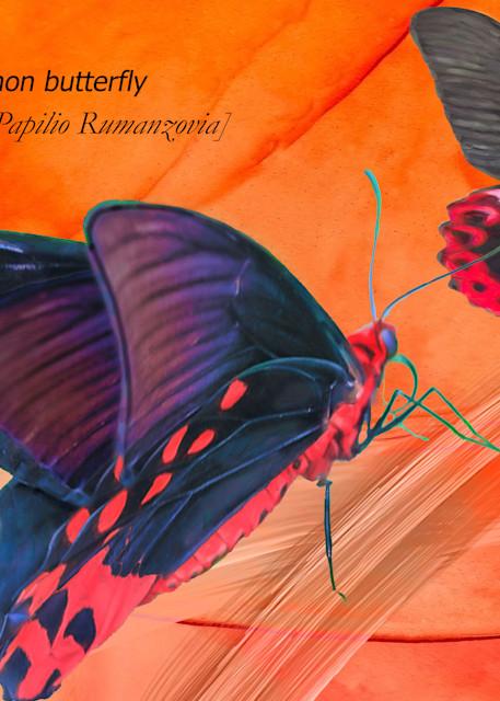 Scarlet Mormon Art | Light Pixie Studio