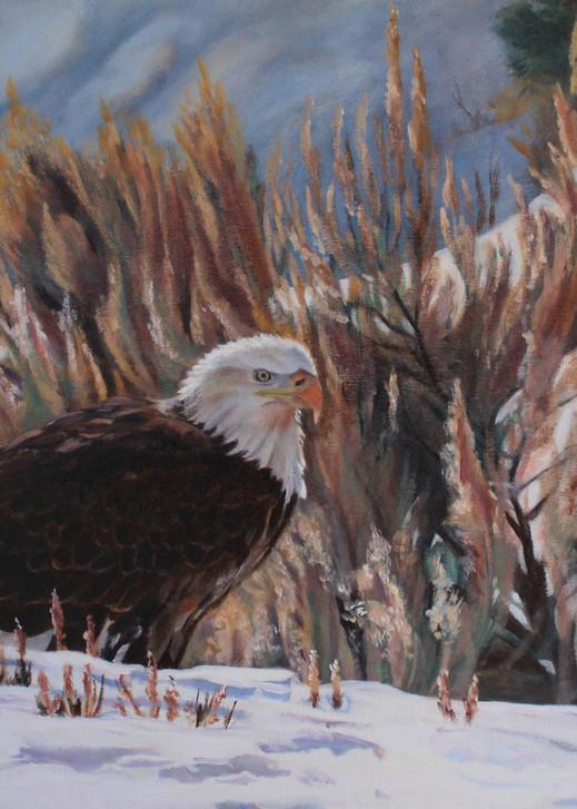 America's Best  Art | Aubrey Kyle Creates