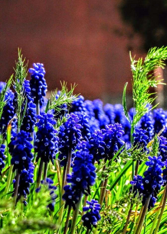 Floral Forest Photography Art | Photoissimo - Fine Art Photography