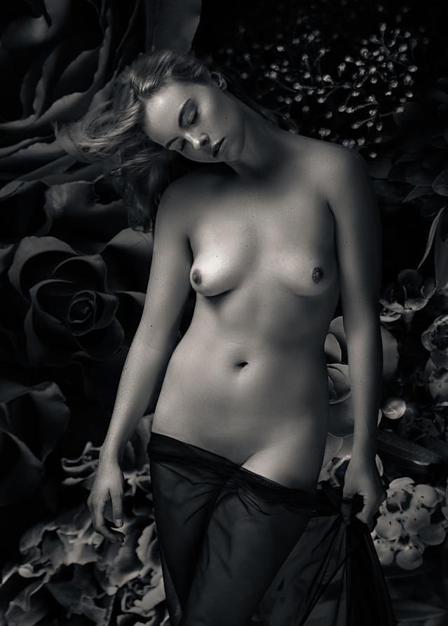 In A Dream Photography Art   Dan Katz, Inc.