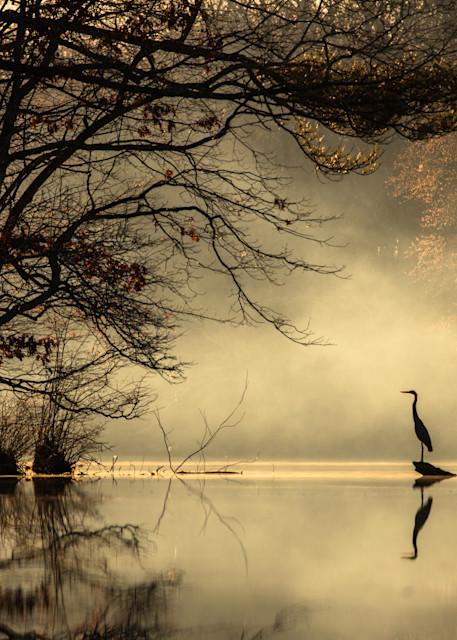 Mist And Heron Photography Art | Silver Sun Photography