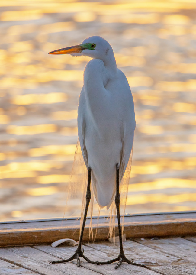 Menemsha Egret Art | Michael Blanchard Inspirational Photography - Crossroads Gallery
