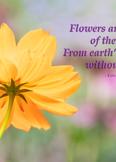 Flowers are the Music of the Ground
