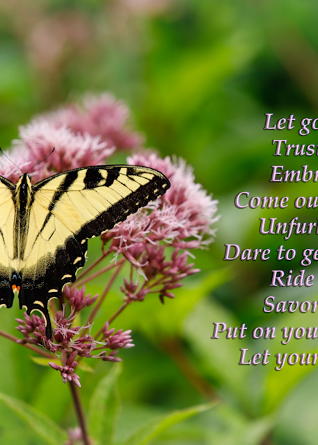Tiger Swallowtail - Let Your Beauty Show