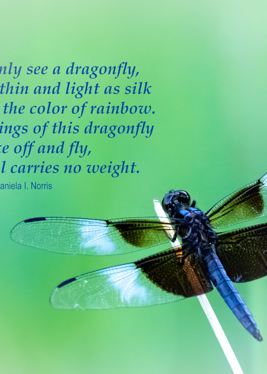 Dragonfly - My Soul Carries No Weight