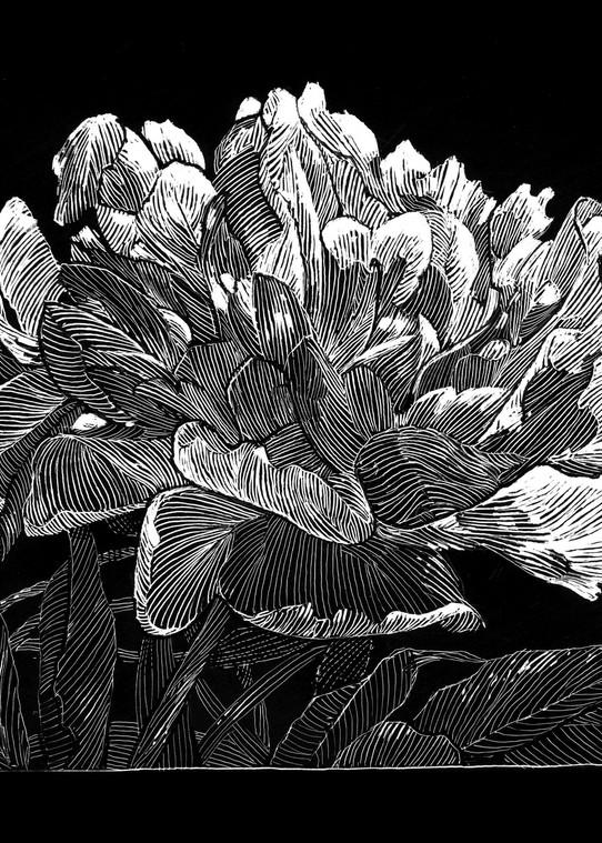 Surprised By Joy Art   Andre Junget Illustration LLC
