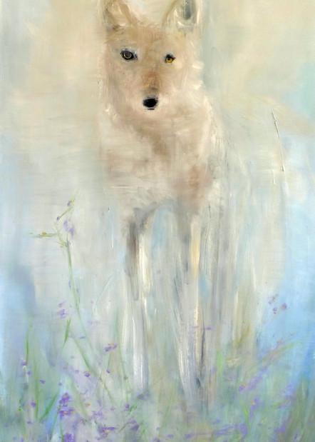Wild White Coyote - Wolf