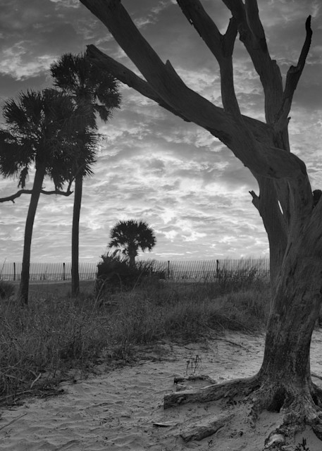 Famous Tree Photography Art | Willard R Smith Photography
