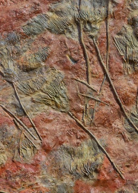 Fossil Flowers