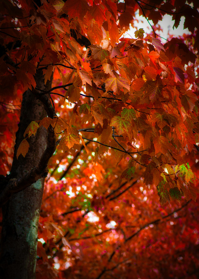 Autumn Leaves Photography Art | Kathleen Messmer Photography