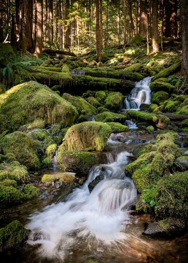 Hoh Rain Forest Photography Art | Scott Krycia Photography