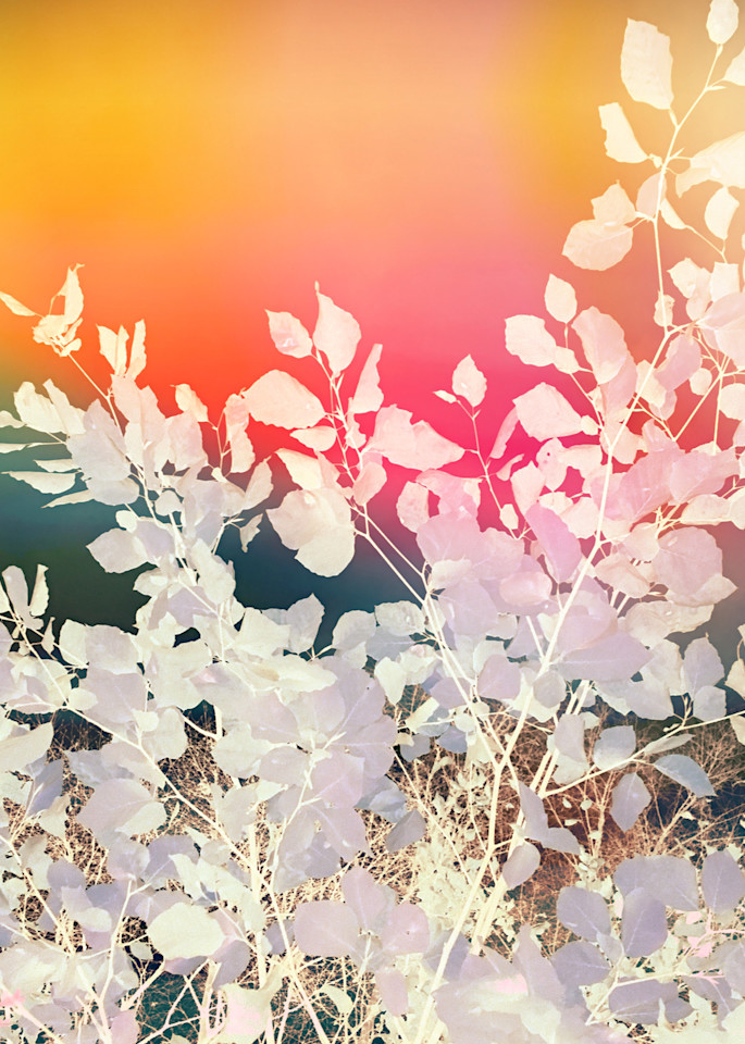 Rainbow Sky Leafy Abstract Art | onlythemoon