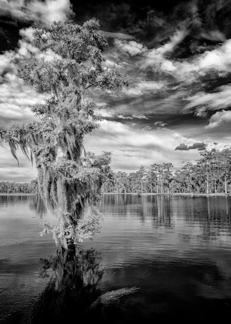 Atchafalaya Black & White   Shop Photography by Rick Berk