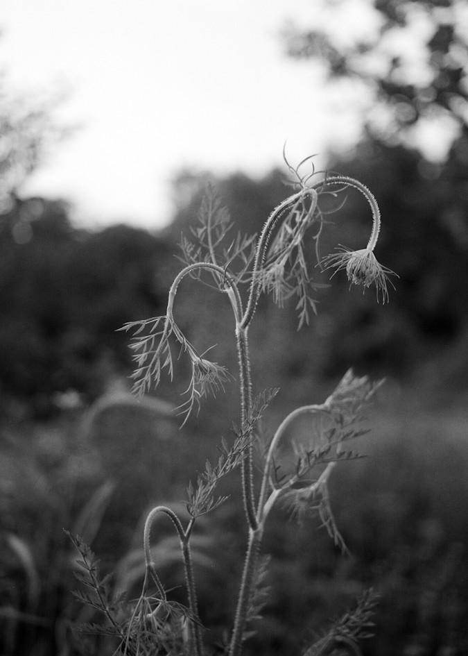 Virginia Cosmos Photography Art | TERESA BERG PHOTOGRAPHY