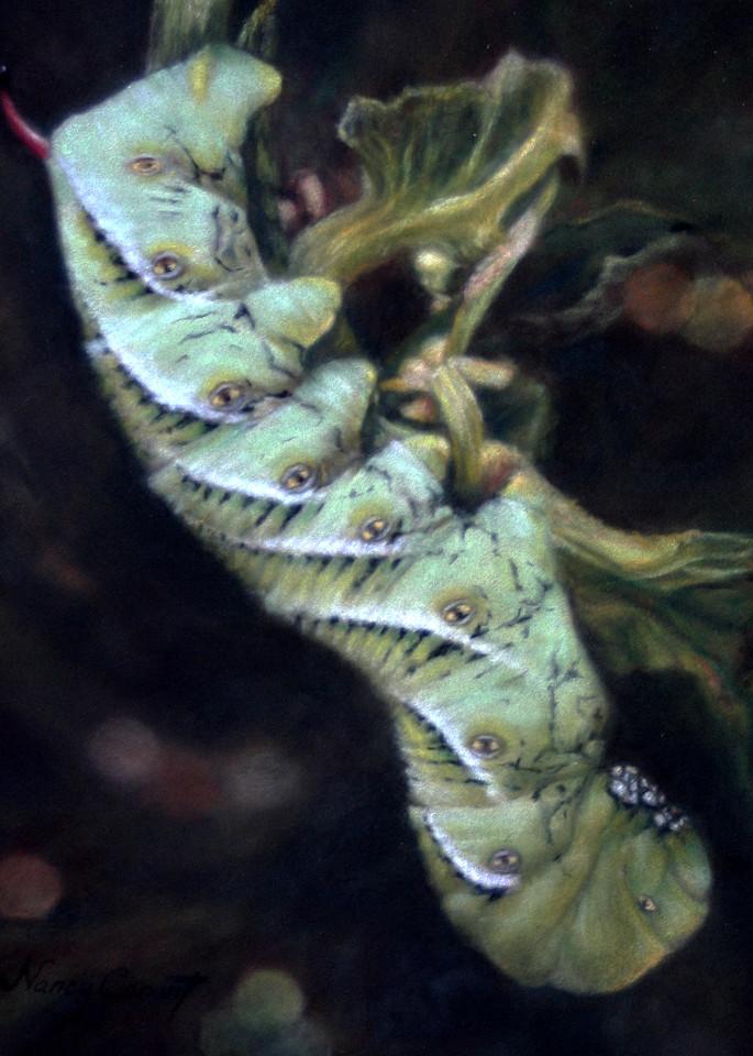 tobacco horn worm, My Backyard Buddy by Nancy Conant